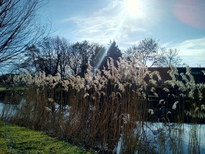 Lens Flare Sun Non-urban Scene Shore Idyllic Tranquility Cloud - Sky Tranquil Scene Scenics Sunbeam Shining Streaming Spraying Pixelated Plant Tree Sky Nature Water No People Beauty In Nature Day Sunlight Growth Reflection Grass Lake Scenics - Nature Environment Landscape Outdoors