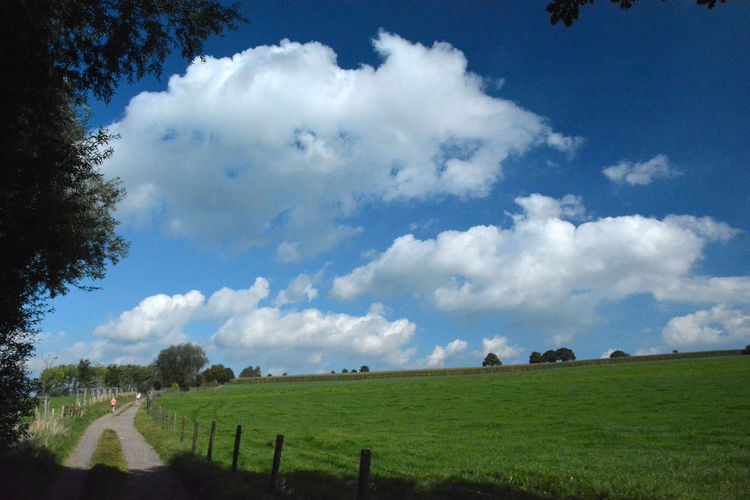 Sky Cloud - Sky Plant Landscape Environment Grass Land Nature Field Tranquil Scene Tranquility Tree Day Scenics - Nature No People Beauty In Nature Rural Scene Barrier Horizon Over Land Boundary Outdoors