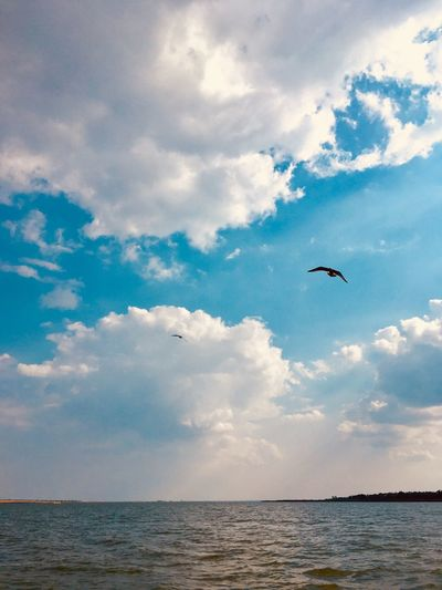 Sky Cloud - Sky Water Flying Animal Animal Themes Sea Animal Wildlife Horizon Over Water Beauty In Nature Vertebrate Scenics - Nature Bird One Animal Nature Tranquil Scene Horizon No People Animals In The Wild Tranquility