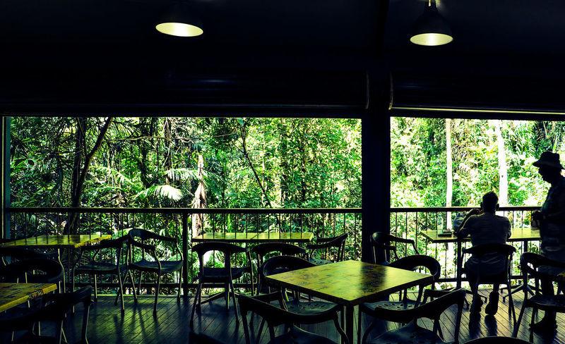 Nature Nature Photography Green Color Indoors  Nature Rainforest Rainforest Australia Window
