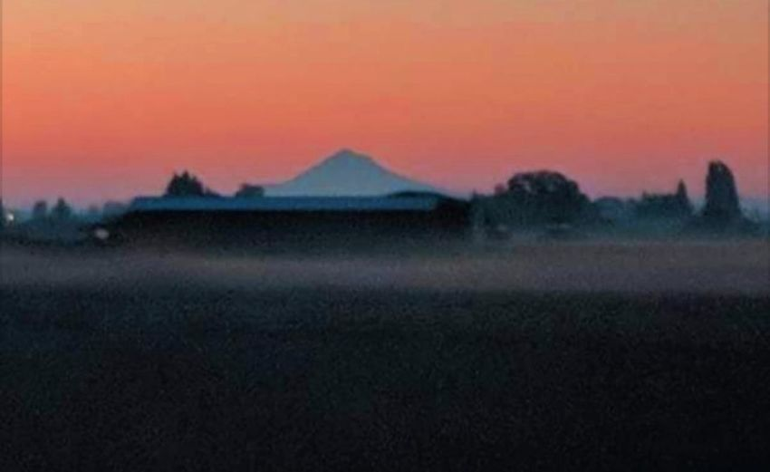 Outdoor Photography MtHoodOregon Streamzoofamily Sunrise_Collection Shining Photography Horizon Growth Pinaceae Taking Pictures Morning Light Rural Scene Dawn Agriculture Field Crop  Sky Landscape Foggy Agricultural Field Farmland Silhouette Outline Orange Color Growing Cultivated Land Corn - Crop Dramatic Sky Fog Tranquil Scene