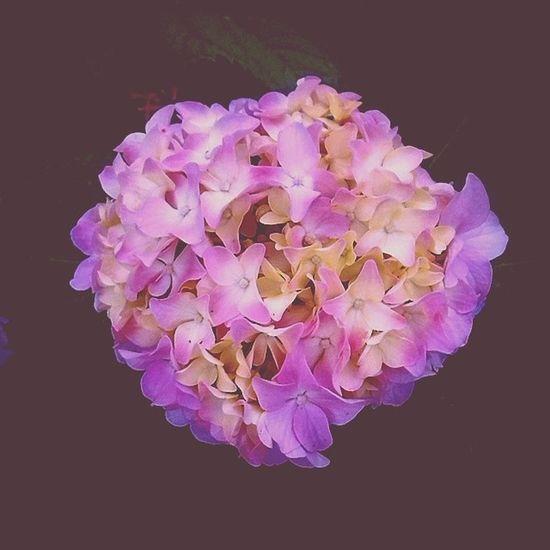 Hydrangea Summer is coming. Exteriordesign