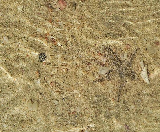 Seafish Sea Sand Beach Animal Themes Nature Outdoors Shell