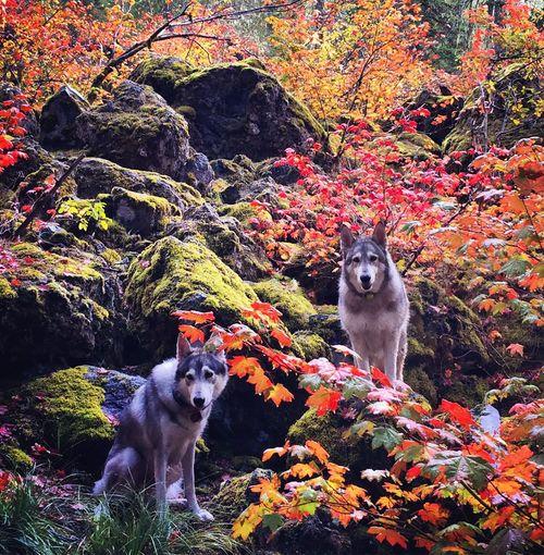 Dogs On Field In Autumn