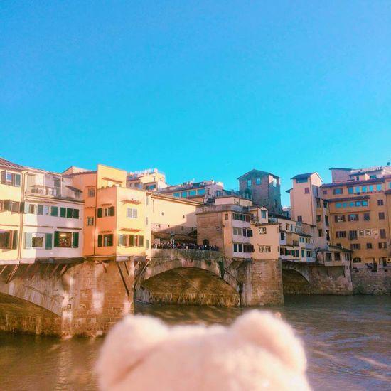 Firenze Firenze, Italy Firenzeview Teddy Bear Ted Teds Travel