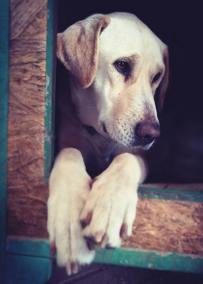 One Animal Animal Themes Pets Dog No People Domestic Animals Day Dogs Dog❤ Dogs Of EyeEm Pet Love Pet Photography