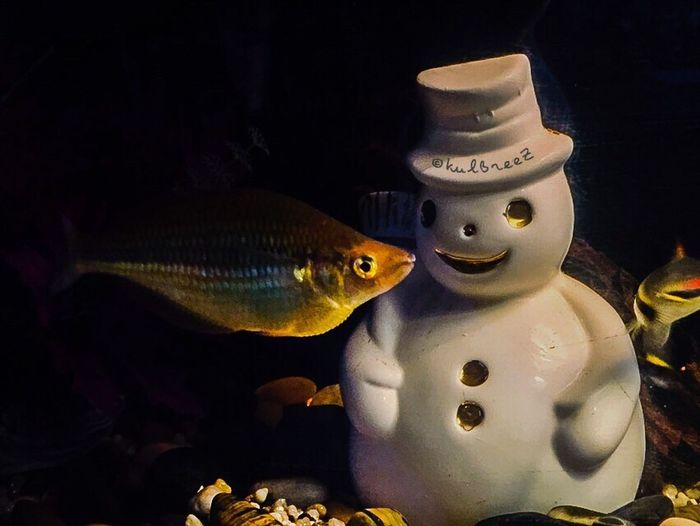 SnowmanChallenge Streamzoofamily EyeEm Nature Lover Fishtank Shades Of Winter This Is Masculinity