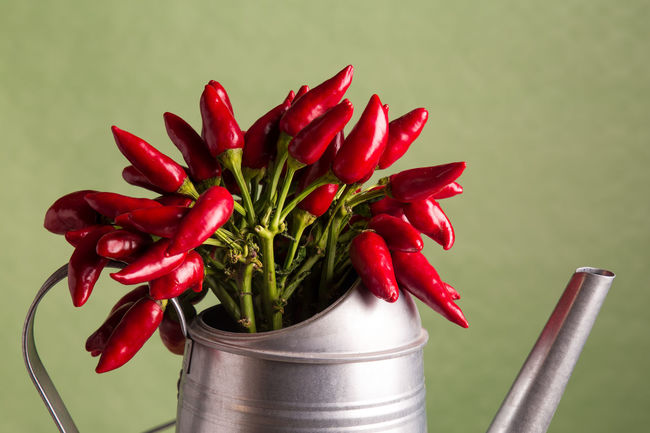 peppers Close-up Freshness Mediterranean Diet No People Peppers Peppers And Onions Red Still Life Photography