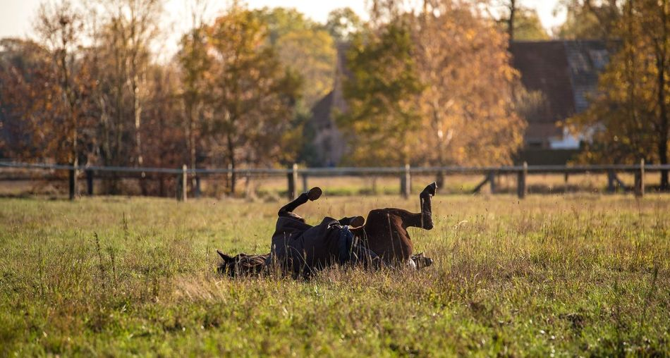 Grass No People Nature Animal Themes Tree Outdoors Day Animals In The Wild Mammal Taking Photos Nikond750 Nikonphotography Nikon 70200f2.8 Horse Horsephotography