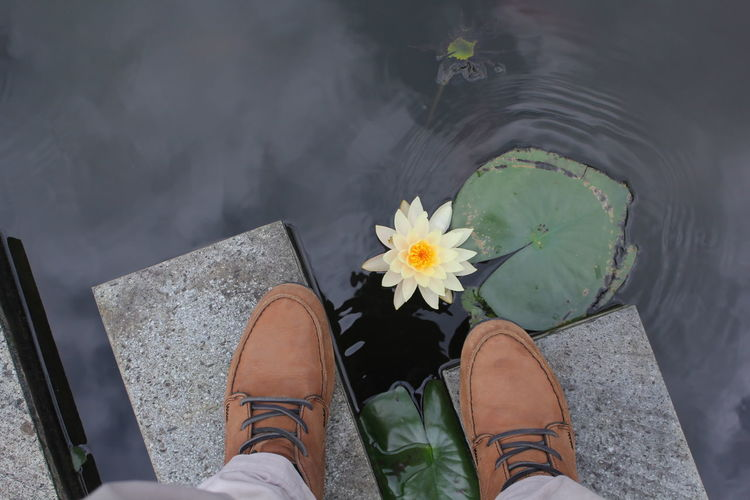 Low section of man standing on stepping stone by water lily in pond