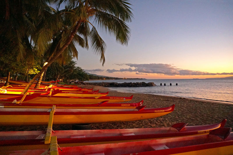 canoe maui EyeEm Nature Lover Nature Beach Beauty In Nature Coconut Palm Tree Enjoying Life First Eyeem Photo Land Nautical Vessel No People Orange Color Outdoors Palm Leaf Palm Tree Plant Scenics - Nature Sea Sky Sunset Tranquil Scene Tranquility Transportation Tree Tropical Climate Water