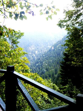 Blacksea Mountain Forest Nature Natural Natural Beauty Travelling
