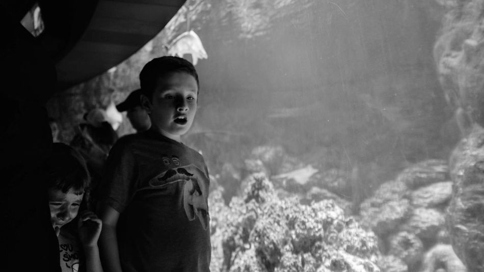 Visual Journal May, 2018 Suzanne and Walter Scott Aquarium Henry Doorly Zoo and Aquarium Omaha, Nebraska Camera Work EyeEm Best Shots Getty Images Omaha Henry Doorly Zoo And Aquarium Photo Essay Unhappy Visual Journal Zoo Always Taking Photos Aquarium Boys Casual Clothing Child Childhood Emotion Eye For Photography Females Fujifilm_xseries Innocence Looking Males  Men Monochrome Offspring People Photo Diary Portrait Real People S.ramos May 2018 Sibling Rivalry Standing Travel Destinations Two People Waist Up The Street Photographer - 2018 EyeEm Awards