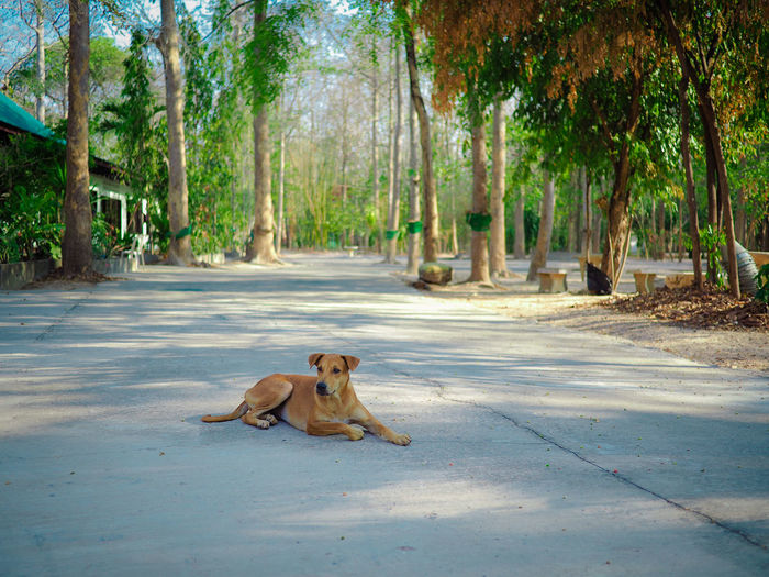 Dog sitting on road amidst trees