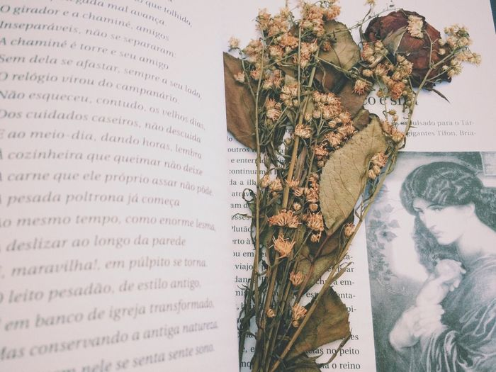 Dried Flower On Open Book