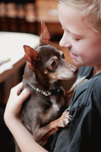 Close-up of boy holding chihuahua dog