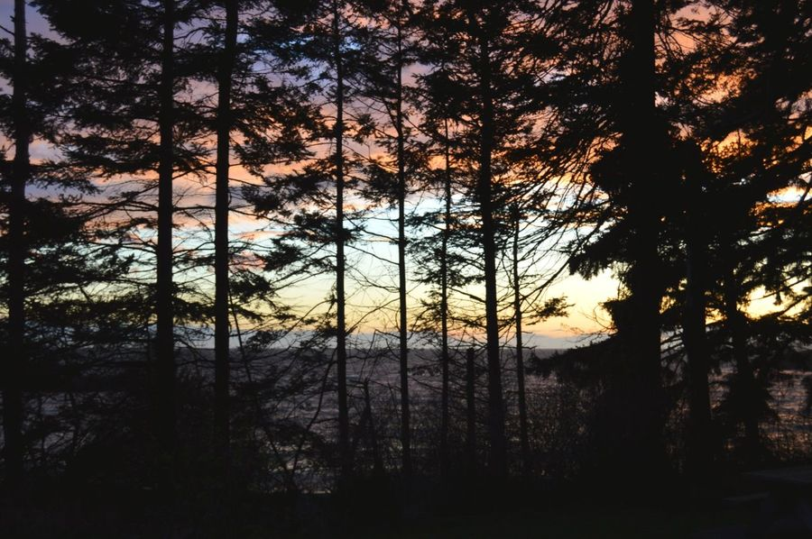 Sunsets Inspire Tree Nature Sunset Beauty In Nature Scenics Tranquility Forest No People Silhouette Tranquil Scene Outdoors Sunset_collection Sunsetlovers Colors Of Nature PNW At Its Finest PNW Sunset And Trees The Secret Spaces The Great Outdoors - 2017 EyeEm Awards