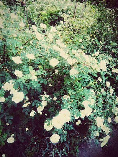 Summer First Eyeem Photo