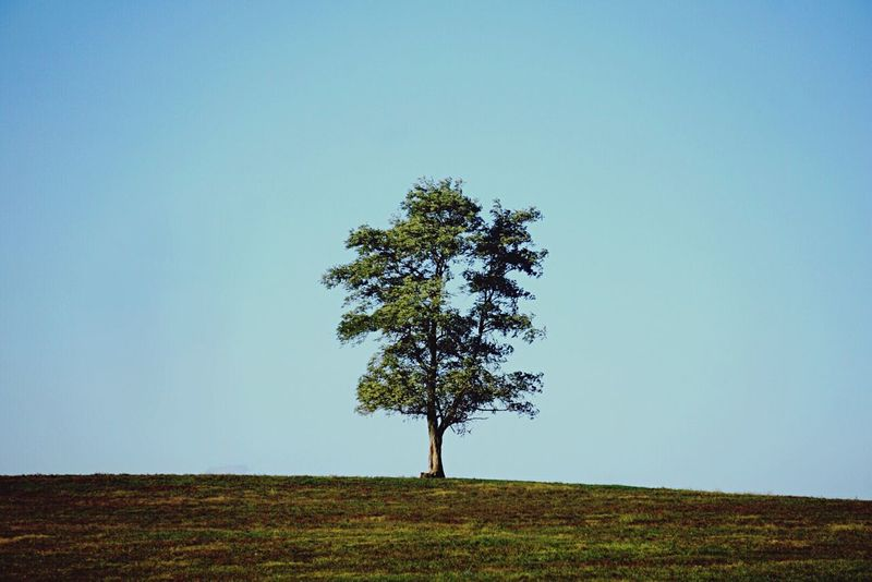 Tree Nature Copy Space Tranquility Clear Sky Tranquil Scene Beauty In Nature Growth No People Outdoors Shootermag Scenics Single Tree Field Day Grass Lone Isolated Sky Explore Kentucky  Reedit