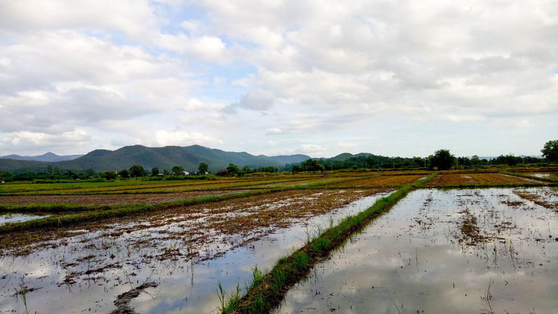 Agriculture Beauty In Nature Chiang Mai | Thailand Cloud - Sky Day Field Landscape Marsh Mountain Nature No People Outdoors Puddle Rice Paddy Rural Scene Salt - Mineral Salt Basin Scenics Sky Tranquility Water