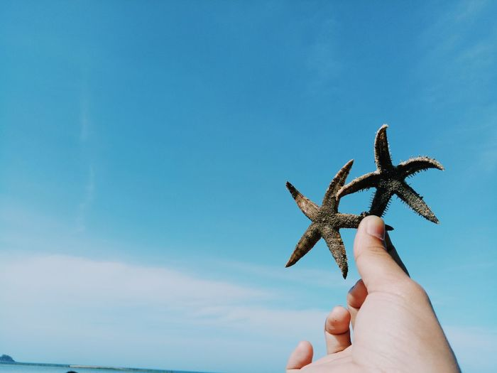 Close-Up Of Hand Holding Starfish Against Blue Sky