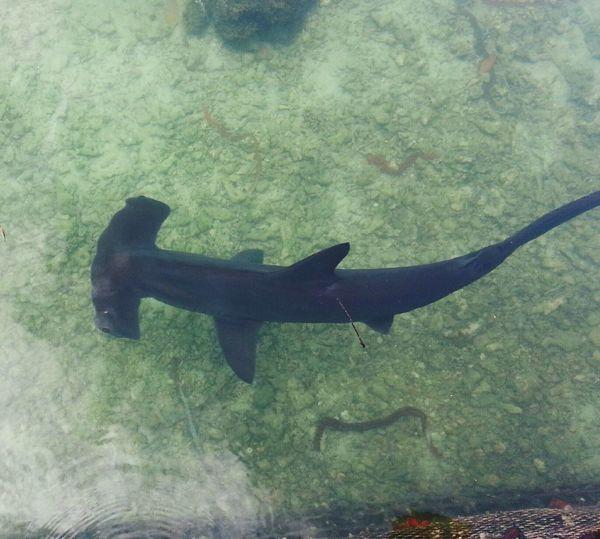 Hello World Aloha World Hammerhead Shark Shark Marine BiologyGilligan's Island Coconut Island