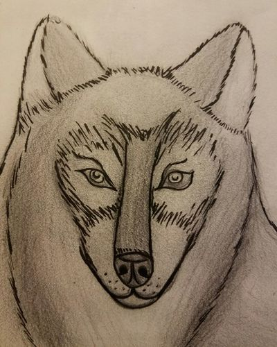 Dog, sketch, bad, first attempt