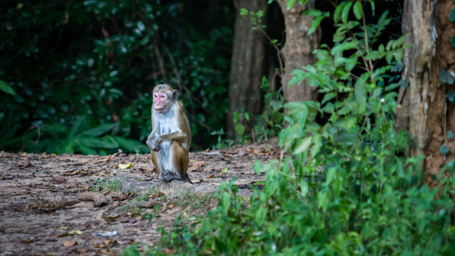 Monkey On Field Against Trees