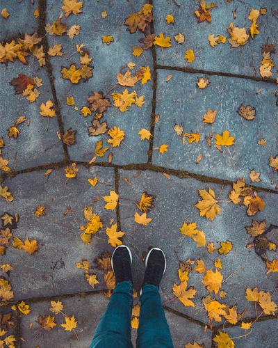 Yellow autumn leaves down perspective Autumn Autumn Collection Body Part Change Day Directly Above High Angle View Human Body Part Human Foot Human Leg Human Limb Leaf Leaves Lifestyles Low Section Maple Leaf One Person Outdoors Personal Perspective Real People Shoe Standing Unrecognizable Person Yellow