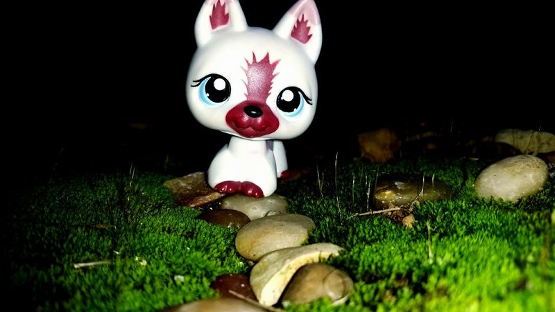 Grass Luck Outdoors Day Littlestpetshop LPs Wildlife Plant Beauty In Nature Green Color Outside Puppy Freshness Path Rocks Pebbles
