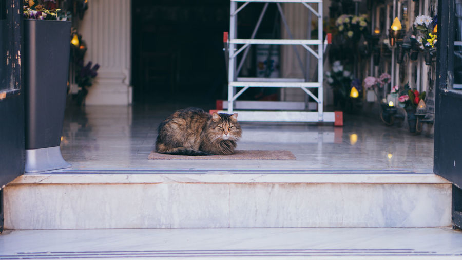 Cat Resting On Porch