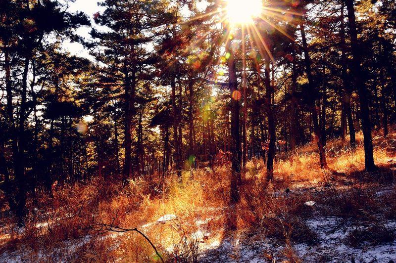 Warm winter sun