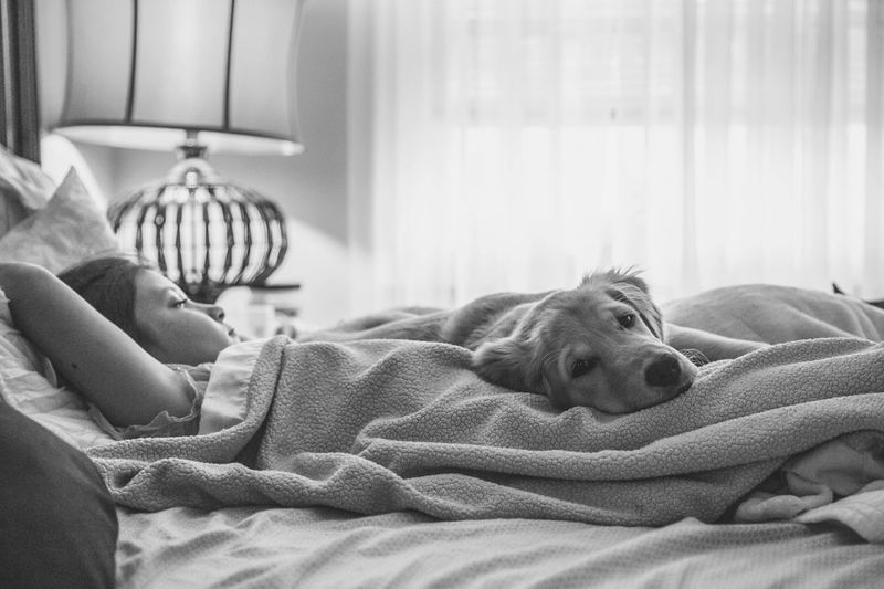 Missing those lazy summer mornings. Open Edit EyeEm Best Edits Tadaa Community EyeEm Best Shots Kids Dog Pets Girl Popular Photos