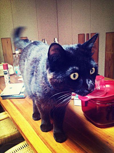 RussellEdgintonII ❤ My Cat