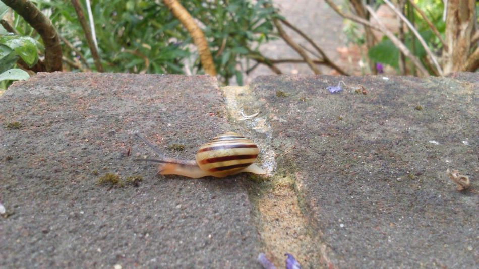 Snail On The Wall Snails Pace Concrete Wall Gastropod Swirly Beautiful Nature Beauty In Nature Nature On Your Doorstep Nature Photography Nature_collection Nature Mollusc Snail Simple Simplicity Snail Shell Snail Collection Slimy Snails Slimy