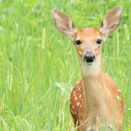 Nature Wildlife Bornfree Tn Iseeyou Canon