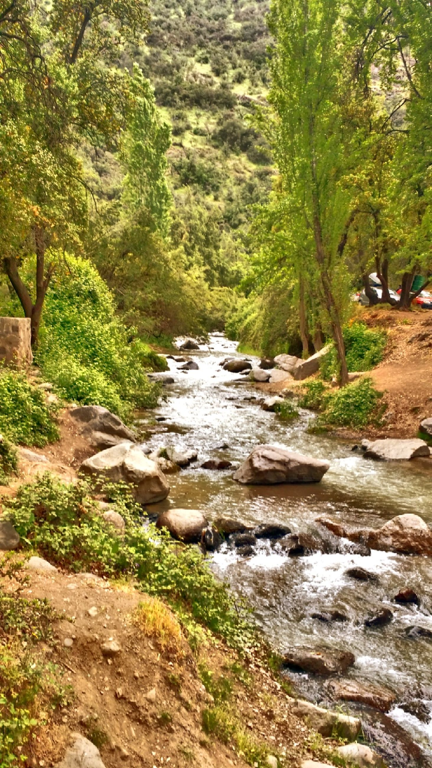 stream, water, tree, flowing water, flowing, forest, scenics, rock - object, beauty in nature, nature, tranquility, tranquil scene, river, motion, growth, green color, waterfall, non-urban scene, plant, landscape
