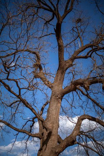 Tree Branch Clear Sky Bare Tree Blue Sky