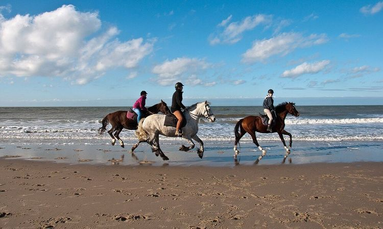 Domburg  Holland Northsea Netherlands Horses Beach Sky Sky And Clouds Ride Waves, Ocean, Nature Zeeland