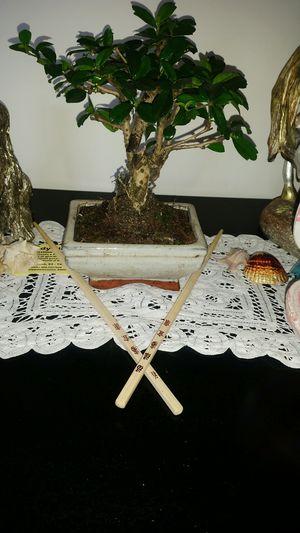 Bonsai Tree Carmona  Carmona Photography Regalo Compleanno Albero Alberello