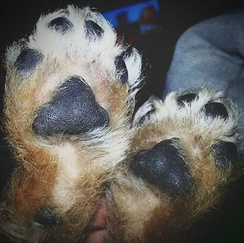 Puppy Love Puppy❤ Puppy Paws