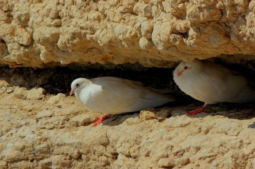 Bird Photography Birds Eyeem Birds 🐦 EyeEm Birds Wildlife Animal Themes Animals In The Wild Sea Bird Nature