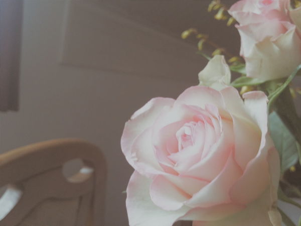 Flowers Flower Roses EyeEm Nature Lover EyeEmBestPics Eye4photography  Rose♥ EyeEm Best Shots Eyem Best Shots EyeEm Gallery Eyem Gallery Rose🌹 Pink Flower Pink Love Pink Color Pink Rose Pink Roses Pink Rose Flower Pink Rose <3