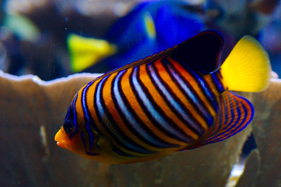 Stripes Animal Animal Themes Animals In Captivity Aquarium Close-up Fish London Zoo Marine Sea Sea Life Swimming UnderSea Underwater Water