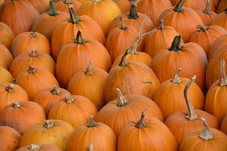 Full Frame Shot Of Pumpkins For Sale