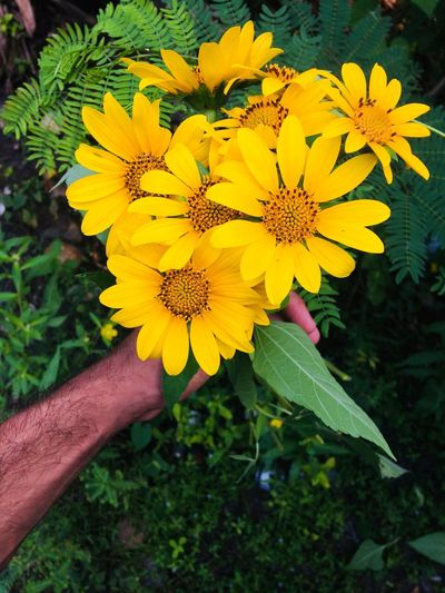 Camp Flower Yellow EyeEm Nature Lover Nature