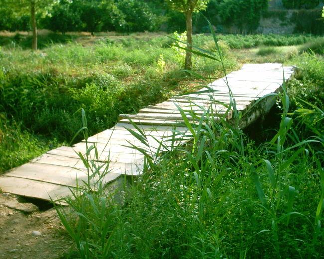 Bridge Comunidad Valenciana Comunitat Valenciana Espana-Spain España🇪🇸 Grass Green Green Color Nature Puente Puente De Madera Regne De Valencia Reino De Valencia Sot De Chera Wood Wood Bridge Rio Turia River Turia