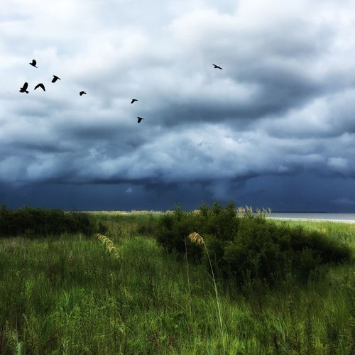 Storm brewing -