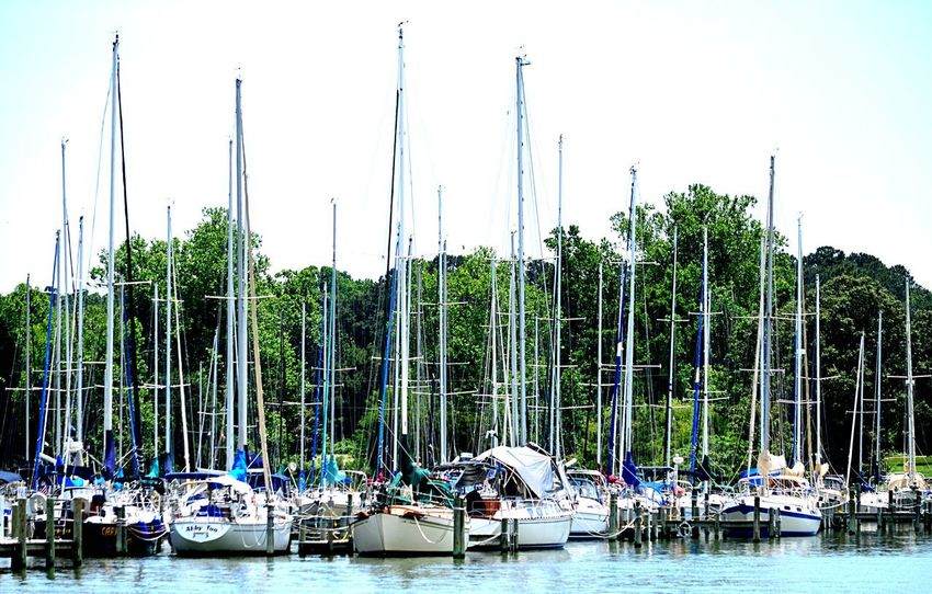 Sailboats moored on the Rappahannock River in Topping. VA 2catswithcameras Topping, VA Boats Day Mode Of Transport Moored Nautical Vessel No People Outdoors Pjpink Rappahannock River River Sailboat Scenics Transportation Tree Water Waterfront