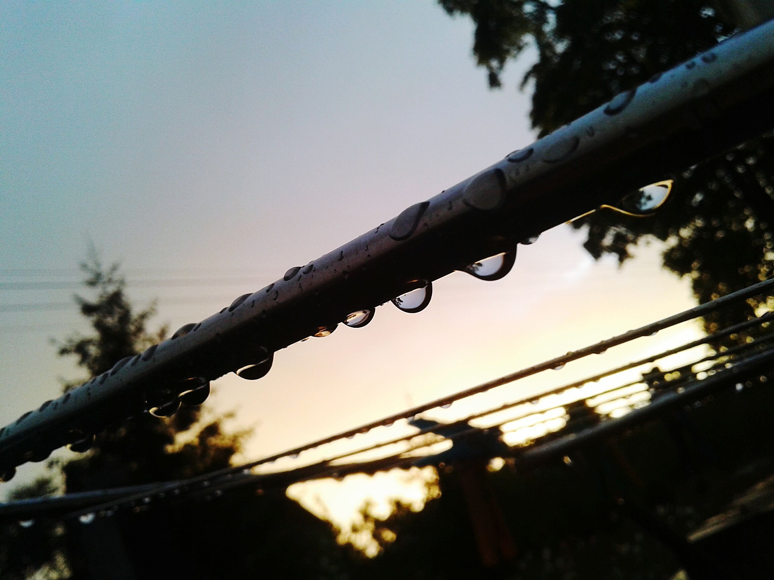focus on foreground, low angle view, close-up, silhouette, branch, sky, clear sky, nature, tree, selective focus, dusk, metal, outdoors, no people, protection, twig, fence, day, barbed wire, growth